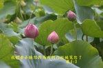 IMG_3582