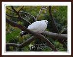 IMG_0005A