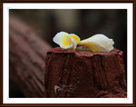 IMG_0010A