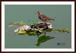 IMG_2521A