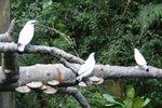 bird 98
