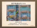 20160214 阿歷山大鸚鵡