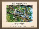 20160320 黑領椋鳥