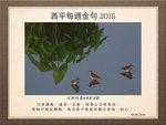 20160605 林鷸