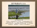 20161113 小白鷺