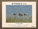 20161120 綠翅鴨