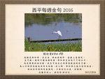 20161204 小白鷺