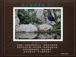 20170108 紫嘯鶫