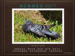 20170723 原鴿