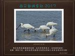 20171203 黑面琵鷺