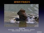 20180715 岩鷺
