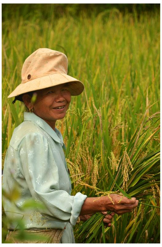 North Vietnam Trekking rice terrance Autumn harvest