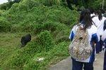 20111111-hoihawan_01-10