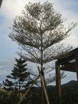 20120212-plantation_02-32
