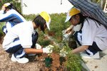 20111022-plantation_05-26