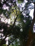 20101113-cuhktrees_01-012
