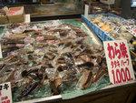 未燒的鰹魚