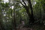沿途樹木茂密