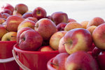 蘋果大豐收