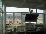 簡頭村天台玻璃屋