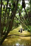 葵林斜樹影
