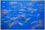 黃鰭兵團 Fish Tail