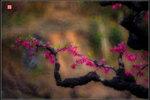 桃花依舊笑春風