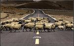 小心橫過馬路