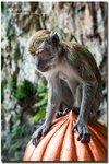 ~ 猴子偷桃