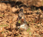 IMG_7864a