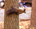 IMG_7902a