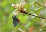 Butterfly37
