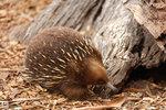 Australia_09A