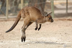 Australia_43