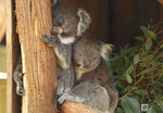 Australia_44