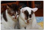 cats002