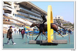 nEO_IMG_horse003