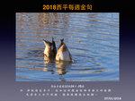 20180107 赤膀鴨