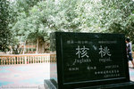 and we reached the 核桃树王, which is at the back.  the tree is 1,362 years old.