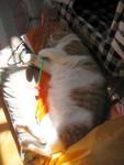 10Dec有隻肥貓o係度曬太陽