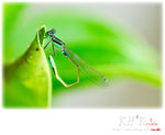 insecta0001