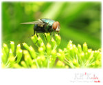 insecta0003