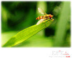insecta0004