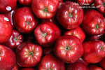 DSC_0031_fruit_word