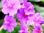 02062012_Flowers@Home Garden00003