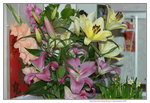 10022016_Lunar New Year Home Flower00080