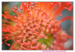 15022018_Victoria Park_CNY Flower Fair_Chrysanthemun00018