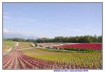 26072018_Nikon D800_19th Round to Hokkaido_Shikisai no Oka00034