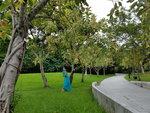 07072018_Samsung Smartphone Galaxy S7 Edge_Taipo Waterfront Park_Lo Tsz Yan00059