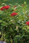 18092010_Scenic of Lingnan Garden00005